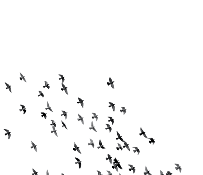 birds_bg_sq